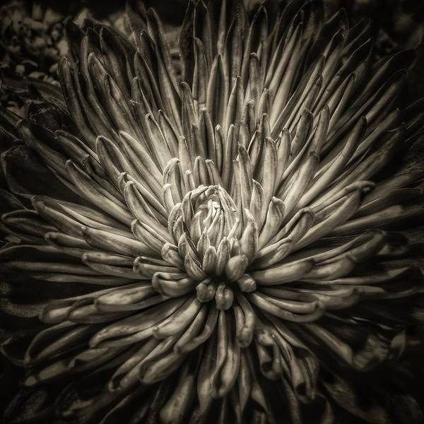Wall Art - Photograph - Floral In Sepia 1 by Tony Ramos