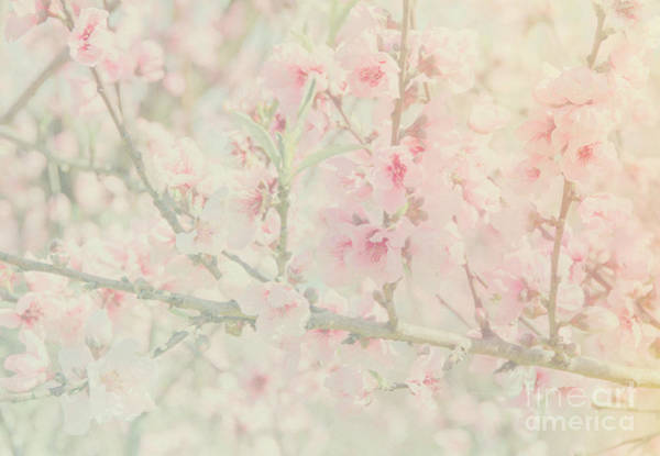 Photograph - Floral Pattern by Andrea Anderegg