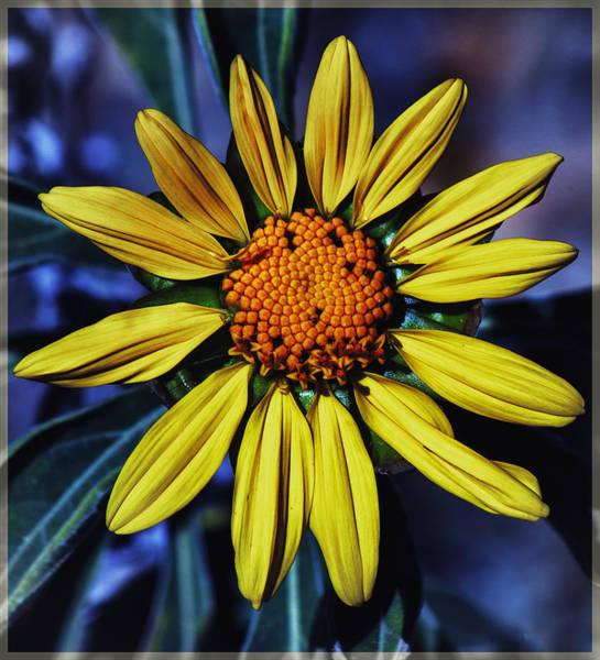 Photograph - Floral Sunburst by Elaine Malott