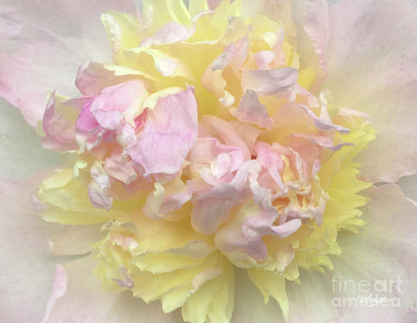 Photograph - Floral Sunrise by Michelle Constantine