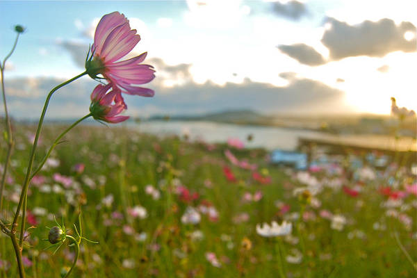 Photograph - Floral Sunset by Yen