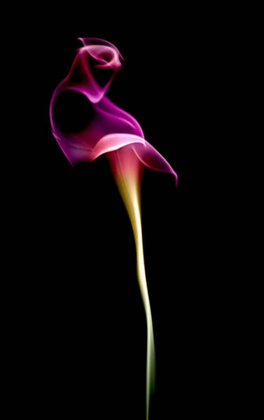 Abstract Smoke Photograph - Floral Wisp by Maggie Terlecki