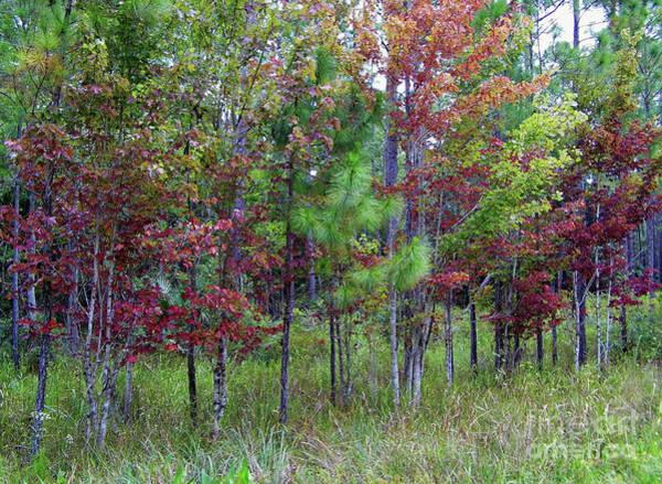 Photograph - Florida Autumn by D Hackett