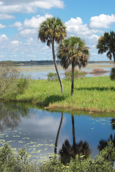 Photograph - Florida Essence - The Myakka River by Susan Molnar
