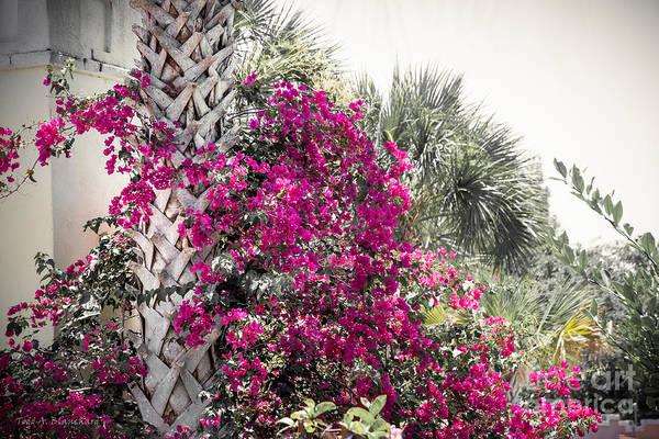 Photograph - Florida Garden by Todd Blanchard