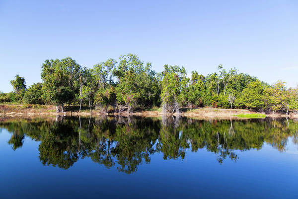 Photograph - Florida Lake And Trees by Dart and Suze Humeston