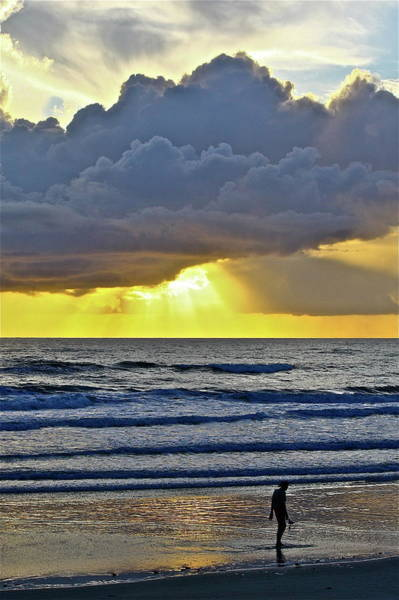 Photograph - Florida Morning by Diana Hatcher