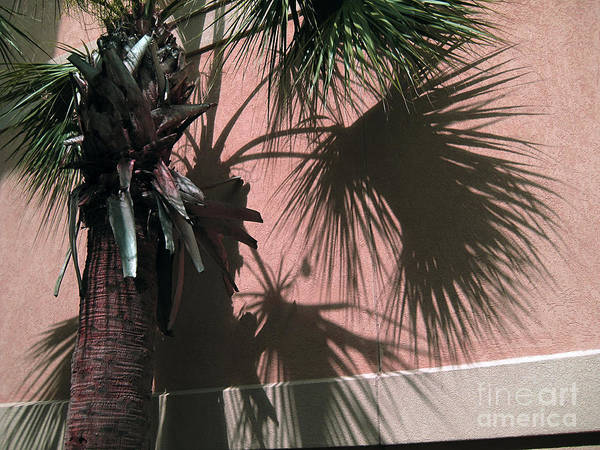 Artful Photograph - Florida Palm   4 by Susanne Van Hulst
