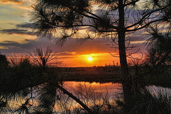 Wall Art - Photograph - Florida Pine Sunset by HH Photography of Florida