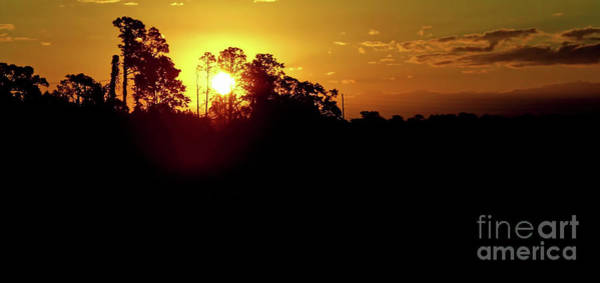 Photograph - Florida Silhouette Sunrise by D Hackett