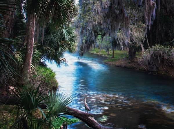 Photograph - Florida Tropical Paradise  by Joy of Life Art