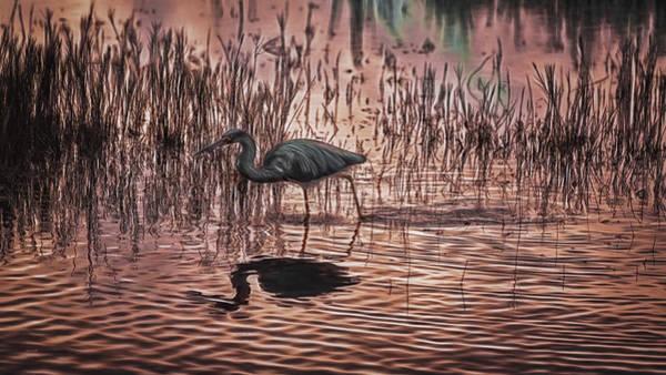 Photograph - Florida Wetlands Abstract by John M Bailey