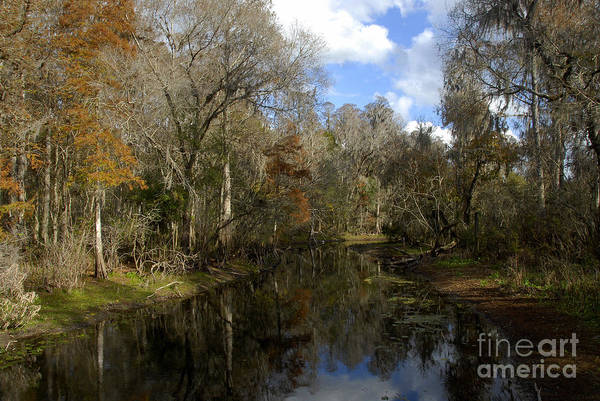 Thompson River Photograph - Florida Wetlands by David Lee Thompson
