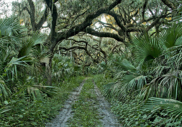 Wall Art - Photograph - Florida Wilderness by Brian Kamprath