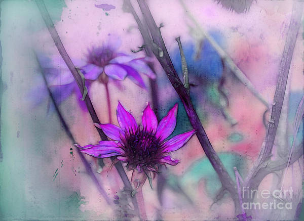Wall Art - Digital Art - Florus - A2b3t12c by Variance Collections