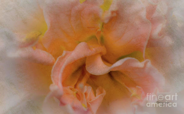 Florwer For You Art Print