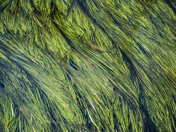 Photograph - Flow by Van Sutherland