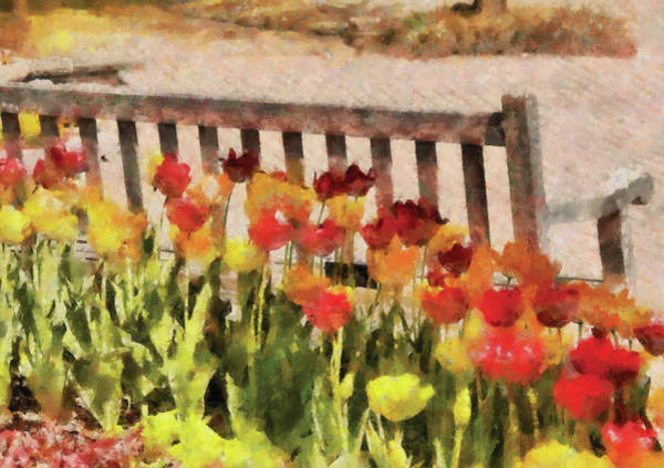 Photograph - Flower - Tulip - Retirement Can Be Sweet by Mike Savad