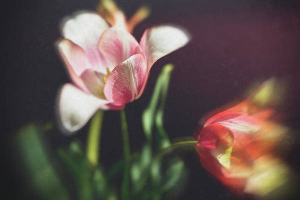 Photograph - Flower-1 by Okan YILMAZ