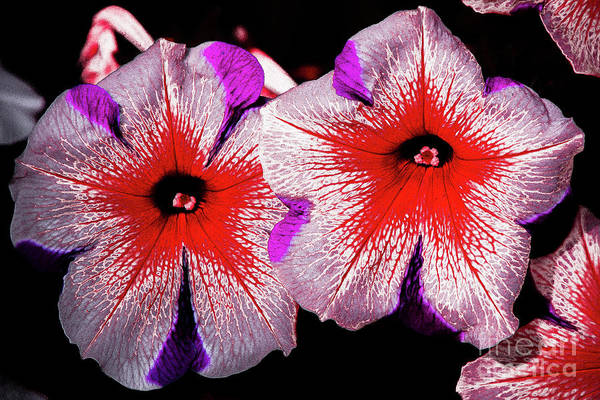 Photograph - Flower 13 by Bruno Spagnolo