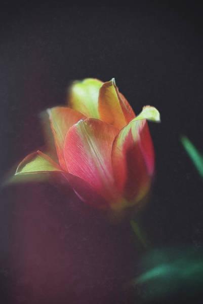 Photograph - Flower-2 by Okan YILMAZ