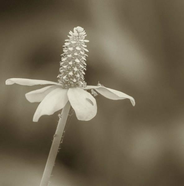 Photograph - Flower 7136-042418-2cr by Tam Ryan