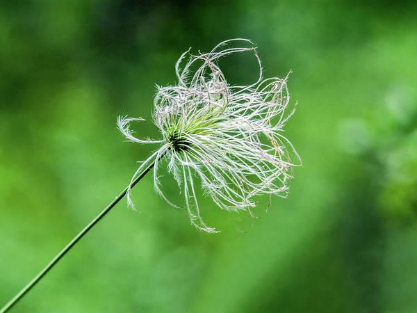 Photograph - Flower 8941 by Tam Ryan