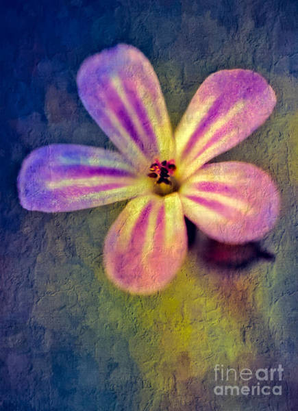 Photograph - Flower by Adrian Evans