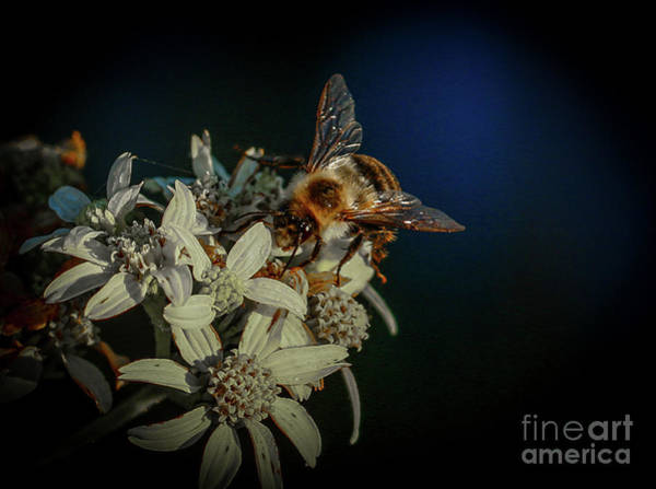 Photograph - Flower And Bee by Tom Claud