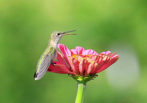 Wall Art - Photograph - Flower And Bird by Steve McKinzie