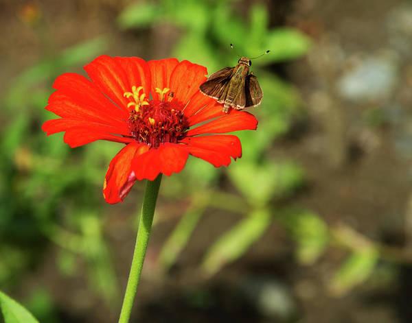Photograph - Flower And Friend by Arthur Dodd