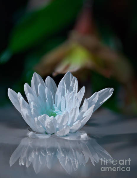 Photograph - Flower And Water by Roger Monahan
