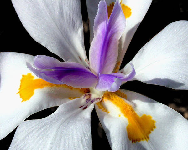 Photograph - Flower by Anthony Jones