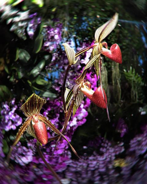 Floristry Photograph - Flower Ball  by Zina Zinchik
