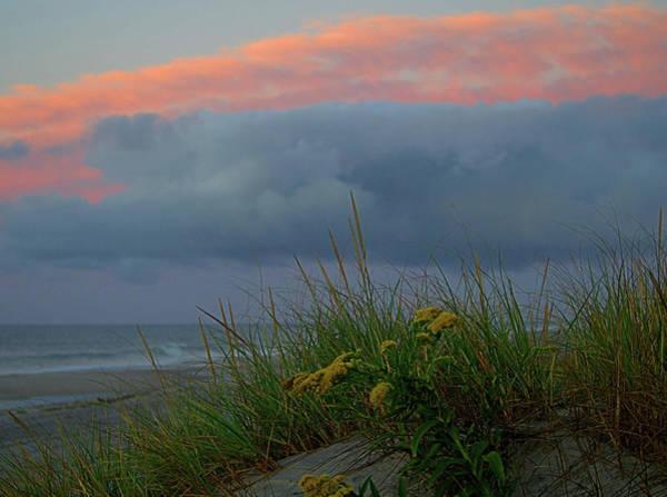 Photograph - Flower Beach by Newwwman