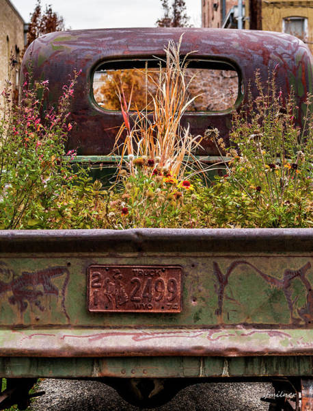 Photograph - Flower Bed - Nature And Machine by Steven Milner