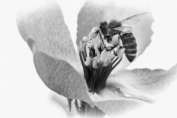 Photograph - Flower Bee by Cliff Norton