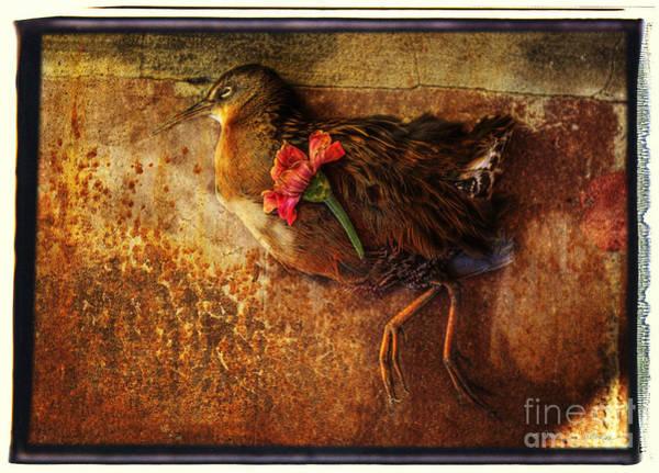 Photograph - Flower Bird by Craig J Satterlee