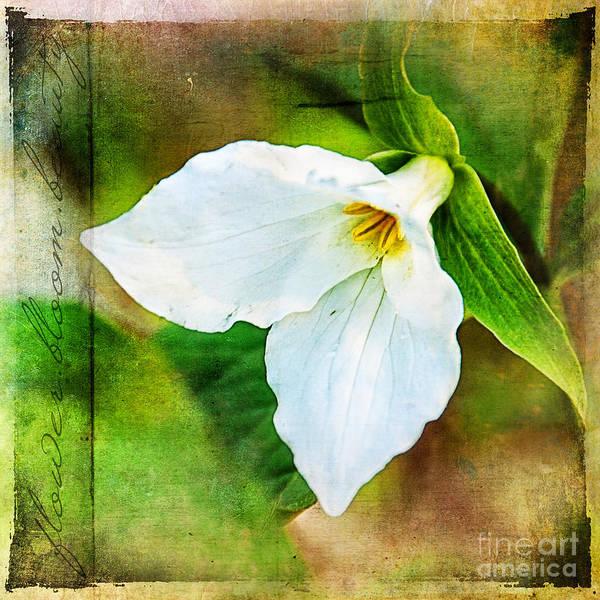Photograph - Flower Bloom Beauty Ginkelmier Inspired by Christina VanGinkel