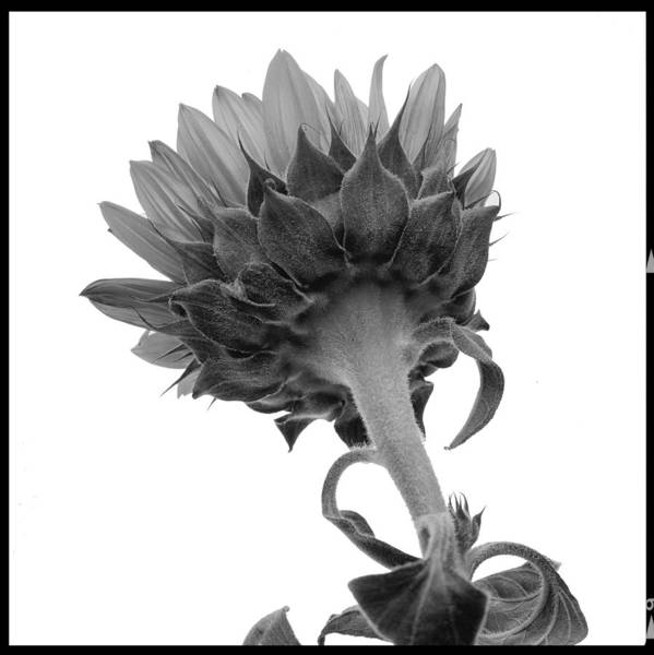 Photograph - Flower by Bud Simpson