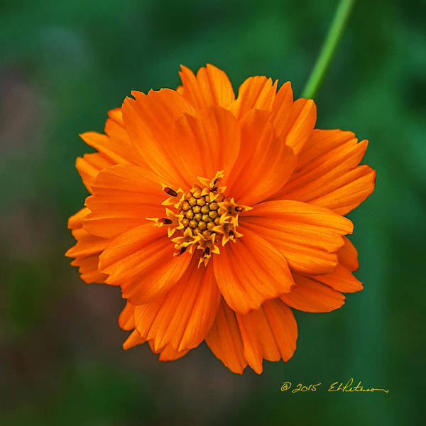 Photograph - Flower Color by Edward Peterson