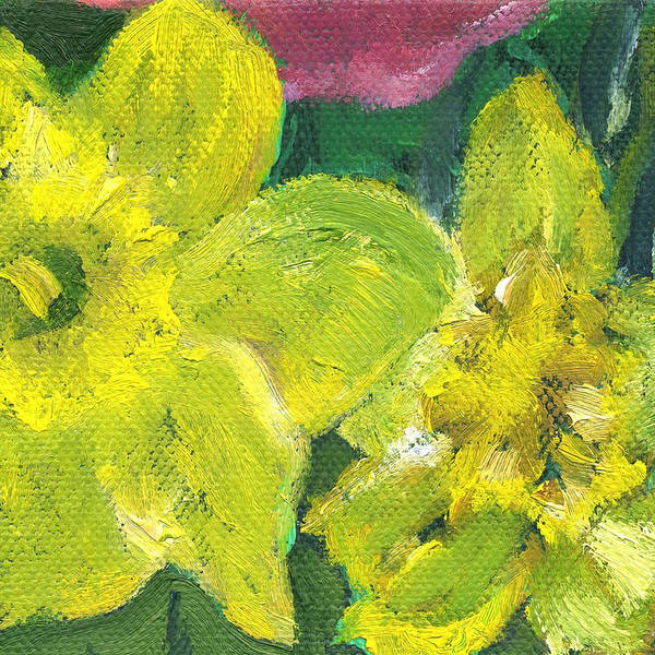 Painting - Flower Daffodil 2 by Kathleen Barnes