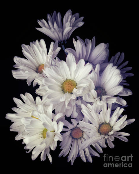 Photograph - Flower Explosion by Tim Wemple