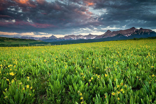 Flower Field And Sneffels Range Art Print