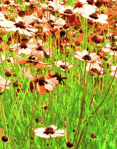 Photograph - Flower Field by Pete Rems