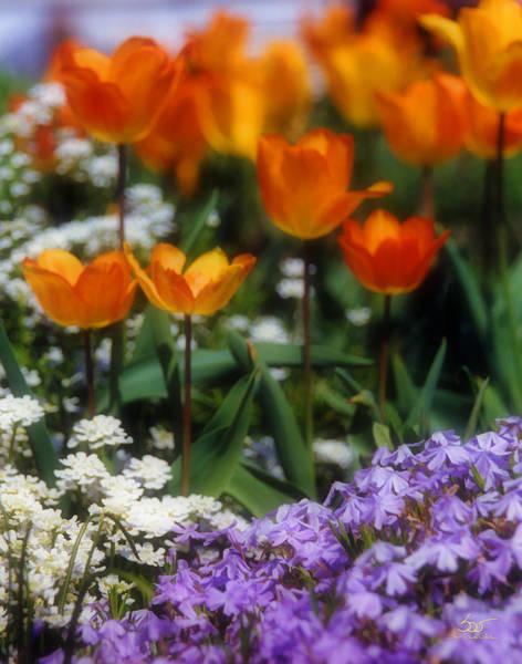 Photograph - Flower Garden by Sam Davis Johnson
