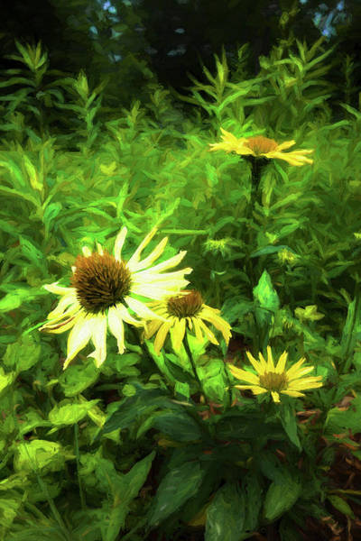 Photograph - Flower Garden Series Y6587 by Carlos Diaz