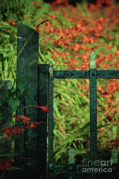 Photograph - Flower Gate by Marc Daly