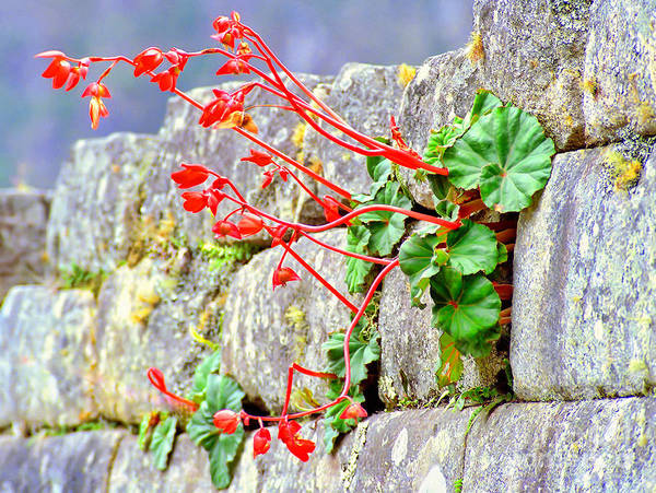 Flower In An Inca Wall Art Print
