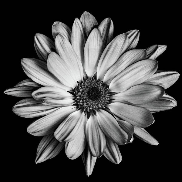 Photograph - Flower In Black And White by Emily Bristor